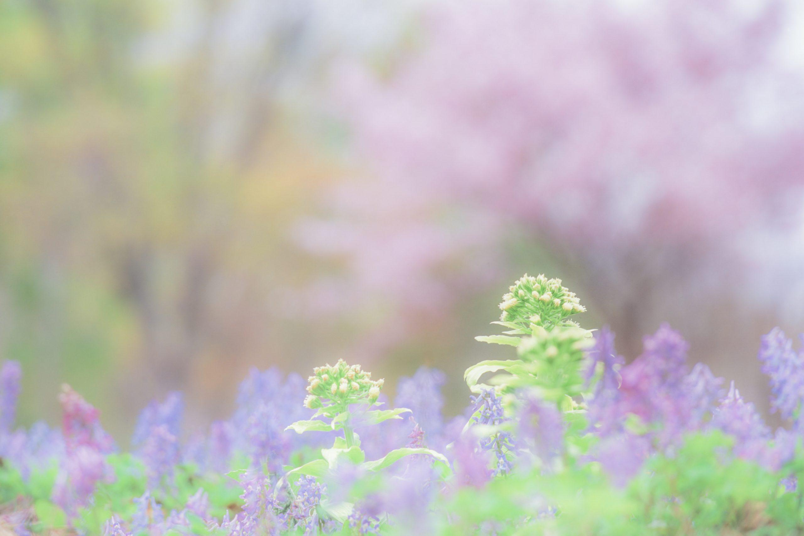 花の撮影テクニック(2)レンズで表現を変える